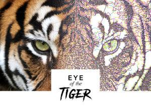 Eye of the Tiger - Reef Photo Stitch