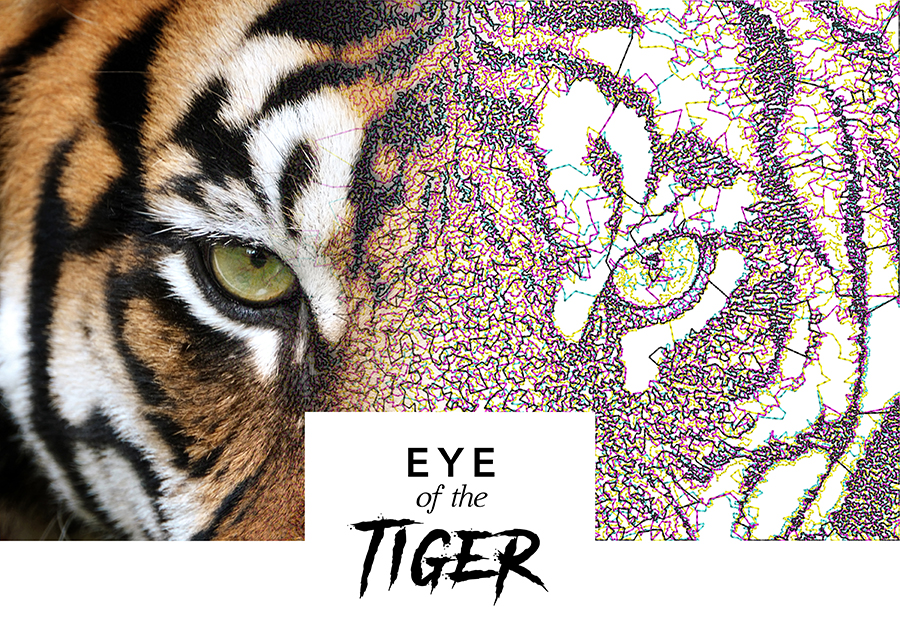 Eye of the Tiger - Reef Photo Stitch